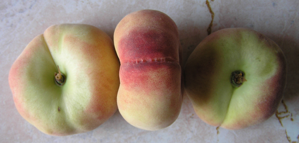 Tabacchere Peaches