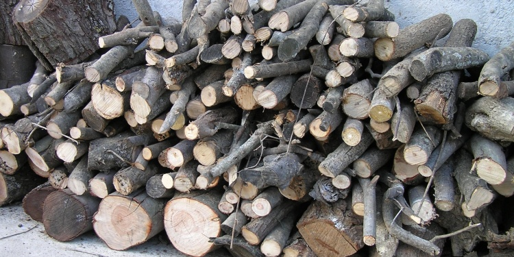 Friday Photo: The humble wood pile