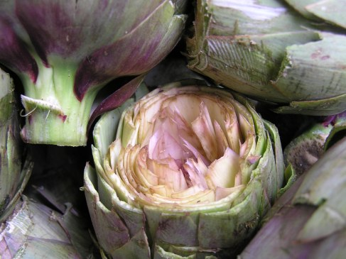 Artichokes ready to be stuffed. Copyright Rochelle Del Borrello 2014