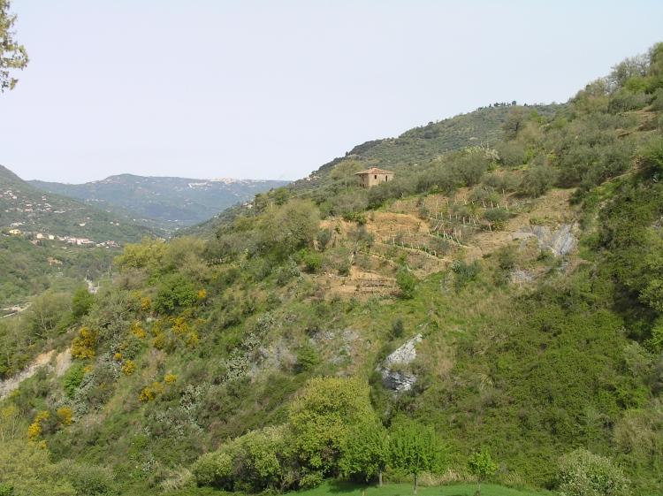Sicilian Panorama Copyright 2014 Rochelle Del Borrello
