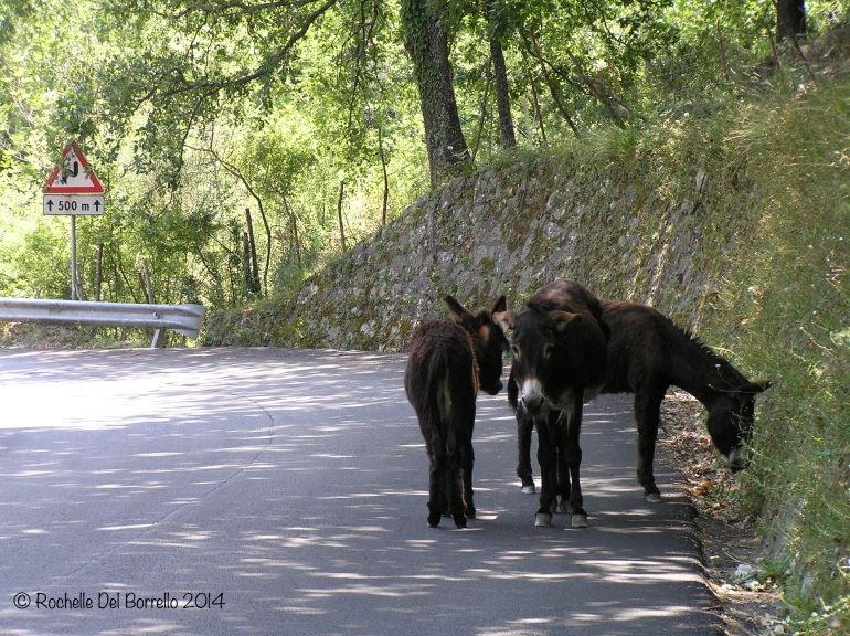 Sicilian donkeys on a mountain road