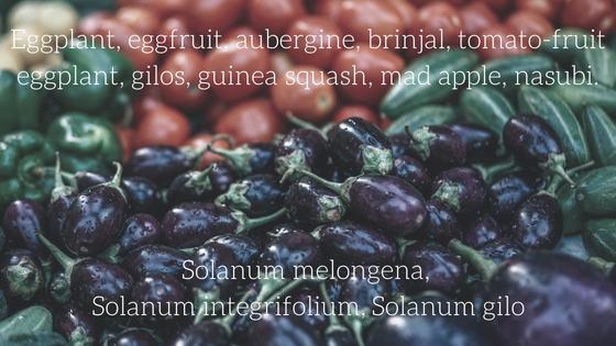 eggplant blog title