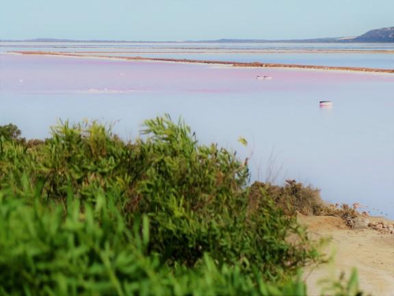 Pink lake 4